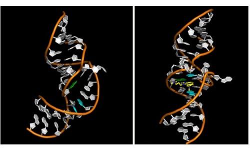 Анализ РНК вируса гепатита С